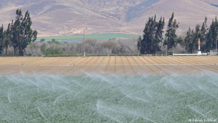 A field is being irrigated outside Soledad in the Salinas Valley (Photo: Fabian Schmidt)
