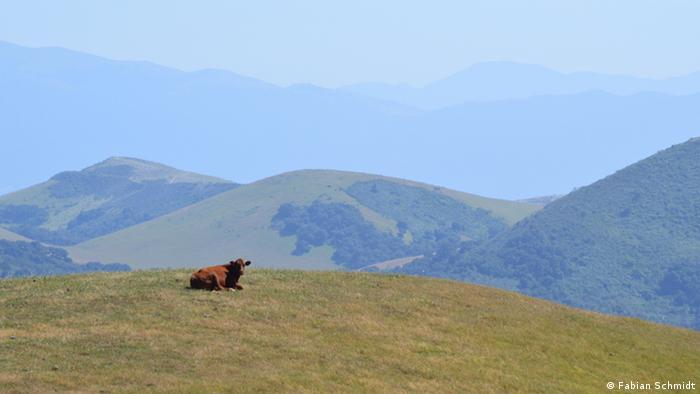 Bildergalerie Flora und Fauna Kalifornien