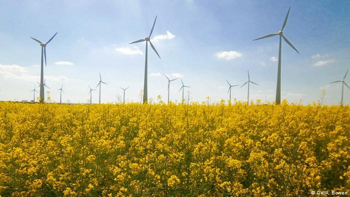 Windmühlen in Rapsfeld