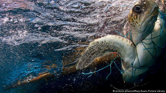 Geisternetze Schildkröte in Fischernetz