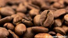 Coffee beans, close-up PUBLICATIONxINxGERxSUIxAUTxHUNxONLY EJWF000672 Coffee Beans Close up PUBLICATIONxINxGERxSUIxAUTxHUNxONLY EJWF000672