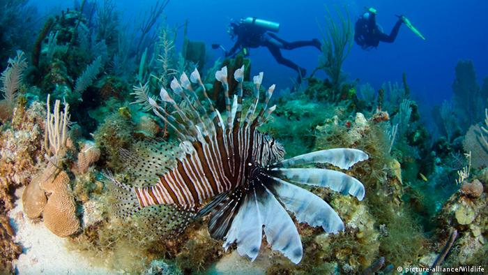 Deep blue sea filled with plants and marine life