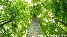 Bild des Tages Deutschland Generhaltungswald Brandenburg