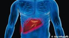 Zum Themendienst-Bericht von Anja Reumschüssel vom 13. November 2013: Ein Tumor in der Leber macht sich meistens nicht bemerkbar - häufig wird die Krebserkrankung daher nur zufällig entdeckt. (Die Veröffentlichung ist für dpa Themendienst-Bezieher honorarfrei.) Grafik: dpa-infografik