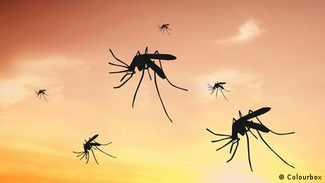 Symbolbild Mücken