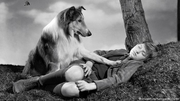 1943 - Lassie Come Home Film (Imago/EntertainmentPictures)