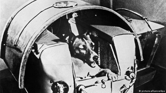 Laika Hund Weltraum