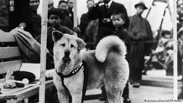 Der Hund Hachiko (Foto: Picture alliance/ CPA Media)