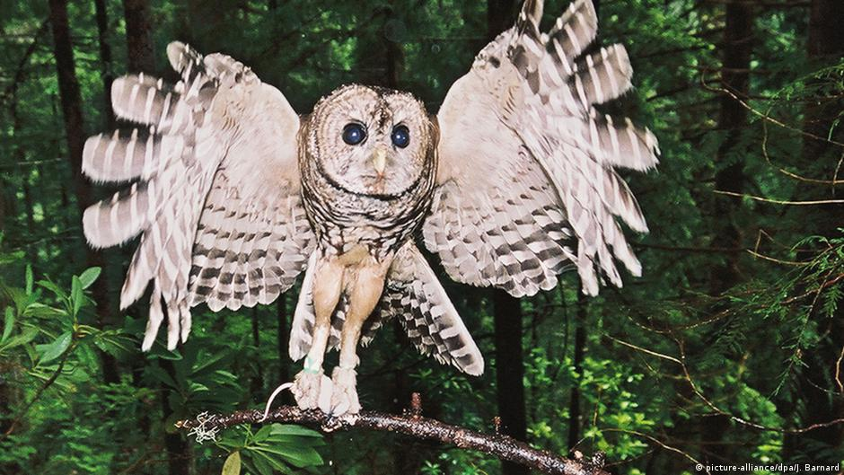 an opinion on the importance of protecting the habitat of spotted owls in the american forests