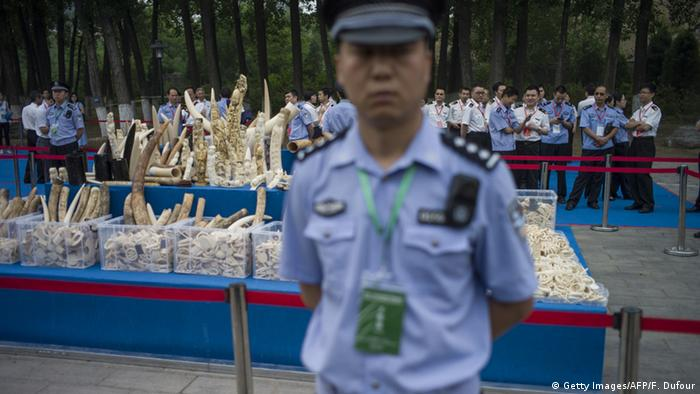 A policeman stands in front of ivory items shown to the media before being destroyed in Beijing on May 29, 2015 (Getty Images/AFP/F. Dufour)