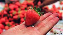 Iran KW22 Erdbeeren (MEHR)