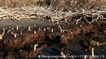 erodierter Boden (Foto: MangroveActionProject / CC BY-NC-SA 2.0 https://www.flickr.com/photos/mangrove_action/2354690931/)