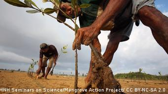 Two men planting mangroves (Source: MangroveActionProject / CC BY-NC-SA 2.0 https://www.flickr.com/photos/seminarsonscience/3639568430/in/photolist-4A5w1c-4A5tMg-4A5spc-4A5sFv-4A5tfv-4A5pzv-4A9KsG-4A9GZ3-4A5rEk-4A5rK6-4A9JaA-4A5rAi-4A9HVu-4A5wiF-4A5u1X-4A5ws8-4A5sKB-4A5vtH-4A9HFs-4A5sdV-4A9J2E-4A9JZG-4A5tHZ-4A5tAR-4A9HRf-4A5pRK-4A5wdB-4A9EDN-4A9HDh-4A9La3-4A5rSc-4A5r9M-4A9G7s-4A9Fy7-4A9FTf-4A5qYB-4A5qUt-4A5qBa-4A9G3Y-4A9FKA-4A9FPf-4A9KQj-qRiyUC-hBiRVd-6xxAo6-6xxAhH-3TzwP1-6xBJTQ-6xBK1j-6xBK9s)