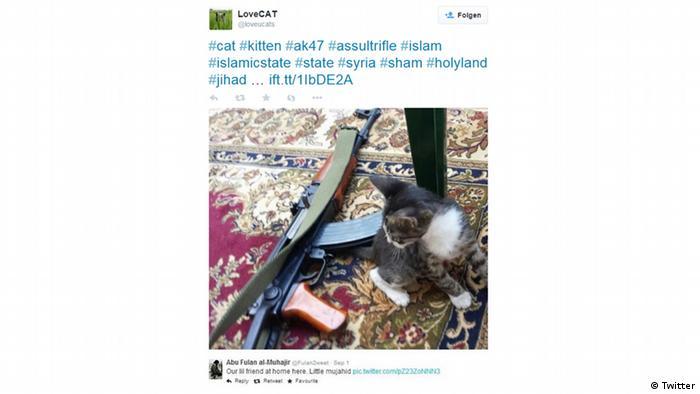 Nur für Life Links - Screenshot Tweet Islamic State Katzen