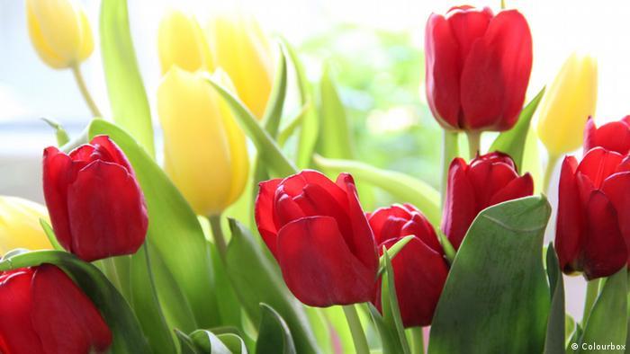 Bildergalerie Blumen der Revolution - Tulpenrevolution Kirgistan