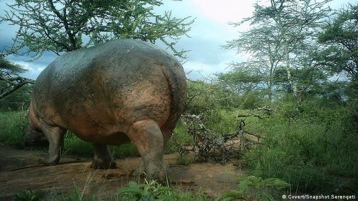Serengeti Selfies (Bildergalerie)