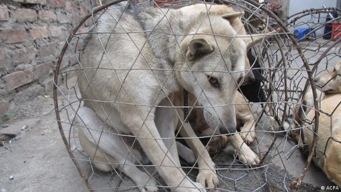 Vietnams Hundefleisch-Debatte | Asien | DW | 27.06.2015