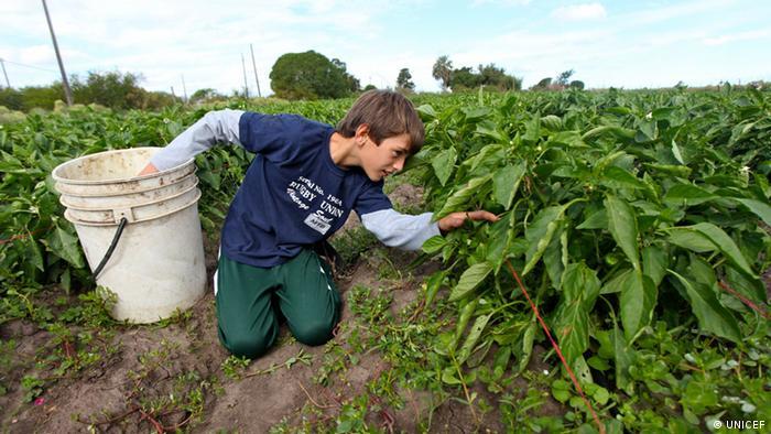 Desetogodišnji Santiago na polju svoje obitelji u Ekvadoru