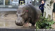 Georgien entlaufenene Zootiere nach Überflutung in Tiflis