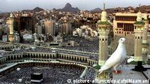 Saudi-Arabien Islam eine Taube in Mekka
