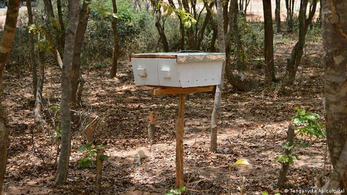 A single beehive in forest land