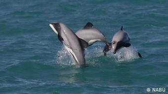 «Πολύ συχνά στα δίχτυα των ψαράδων πιάνονται δελφίνια, φάλαινες, καρχαρίες, θαλασσοπούλια, θαλάσσιες χελώνες»