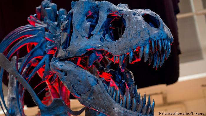 Skelett eines ausgewachsenen Tyrannosaurus Rex