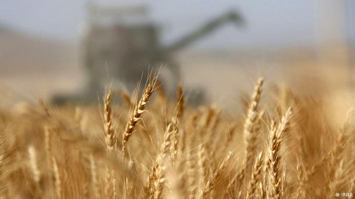 Iran KW26 Weizen