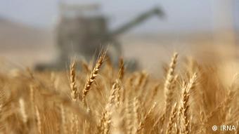 Из сырья, которое производят аграрные предприятия Порошенко, его заводы делают, в том числе, крахмал