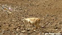 Dürre in Santiago Insel Kap Verde