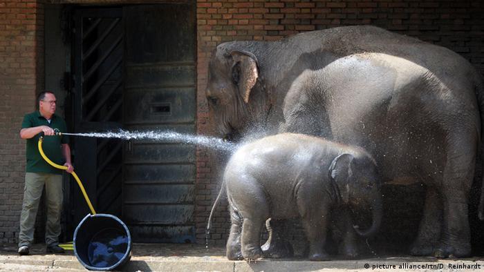 Kebun Binatang Tempat Memelihara Atau Menyiksa Lingkungan Dw