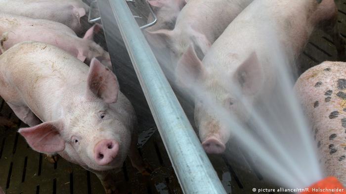 Bildergalerie Hitzetoleranz und -Regulation von Tieren
