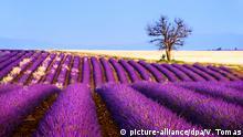 Frankreich Provence Lavendel