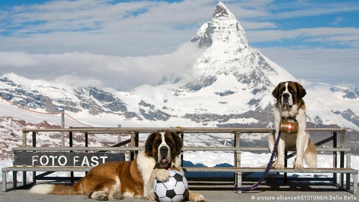 Schweiz Matterhorn Alpinismus Bernhardiner
