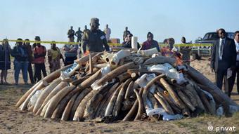 Mosambik - Elfenbeinverbrennung (privat)