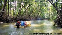 Brasilien Mangrove