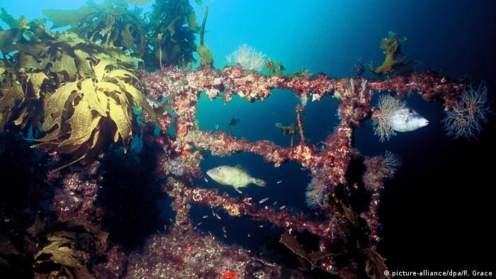 Neuseeland Matauri Bucht Schiffswrack
