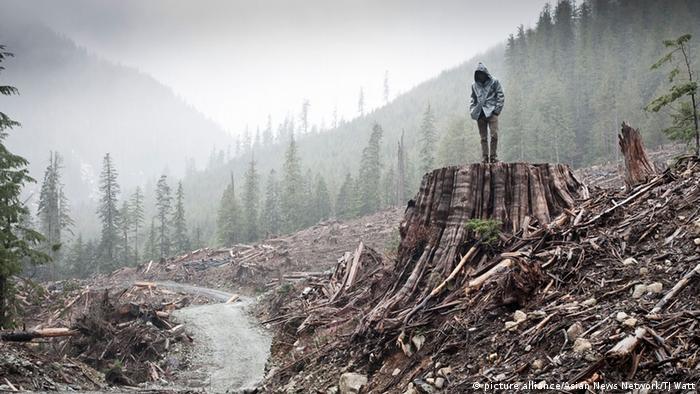 Documentary Film Editing Award 'If A Tree Falls'