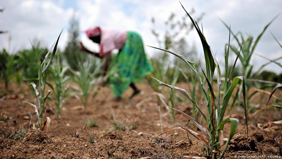Living Planet: Farming to survive in Kenya
