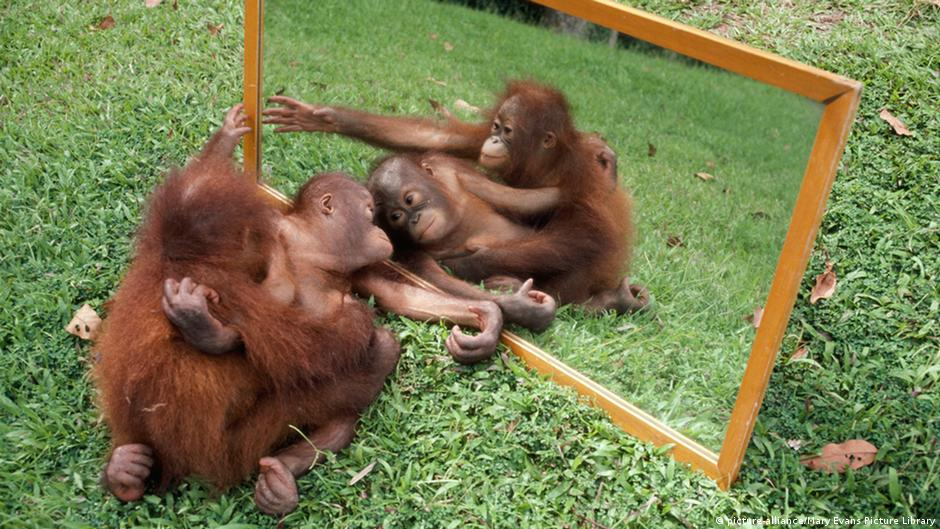 Primates oral sex