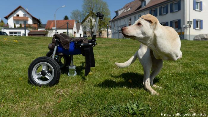 Deutschland Laufwagen für behinderte Hündin Luisa