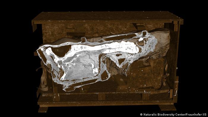 Computertomographie-Scan eines bedeutenden T. rex-Schädels bei Fraunhofer