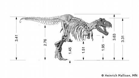 Museum für Naturkunde Berlin Tyrannosaurus Rex Tristan