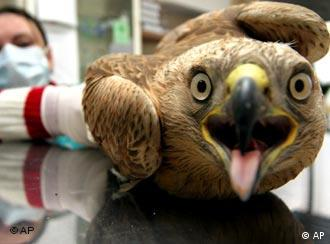 Paranoia is rife as dead birds turn up in Europe