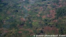 Symbolbild Abholzung Holzhandel CAR Zentralafrikanische Republik