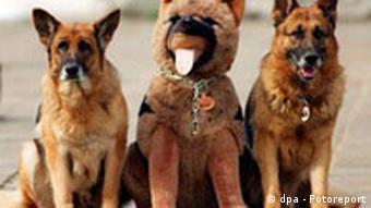 Two German shepherds with a toy version in the middle
