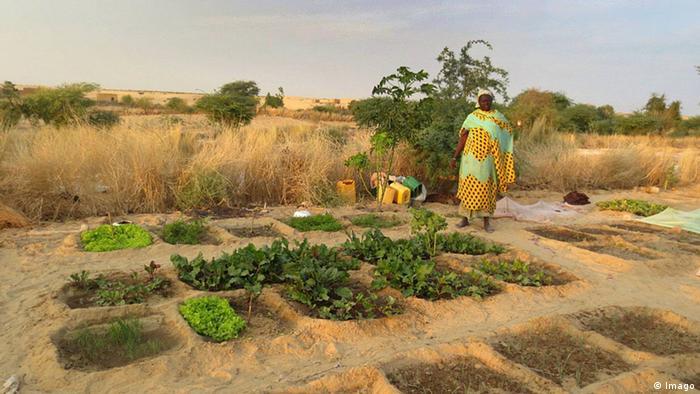 vegetable farmer in Mali