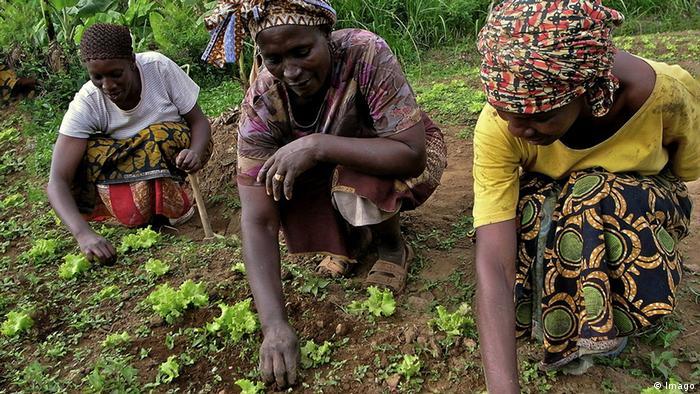 Afrika Tansania Kleinbauern Landwirtschaft Anbau Gemüse (Imago)