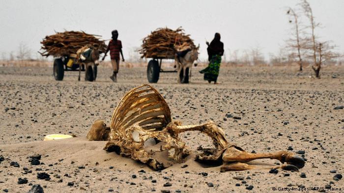 Kenia Athibohol Dürre Verendete RInder 2011