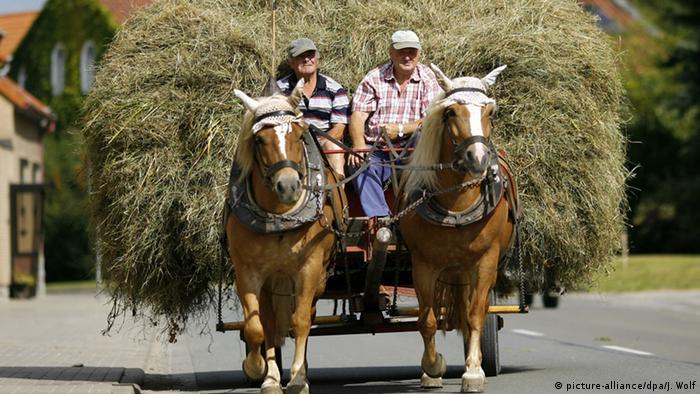 Deutschland, Pferde-Fuhrwerk mit Heu